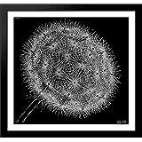 Blowball II 30x28 Large Black Wood Framed Print Art by M.C. Escher