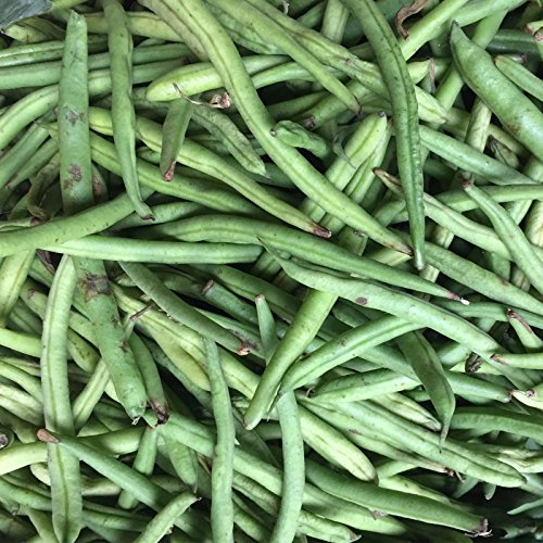 Stringless Green Pod (Stringless Green Pod Bush Bean Seeds (Burpee) - 5 Lb - Non-GMO, Heirloom Green Snap Bean Seeds - Vegetable Garden Seeds)