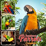Beauteous Parrots Calendar: 16 Month Calendar with Beautiful Parrots (Sept 2017 - Dec 2018)