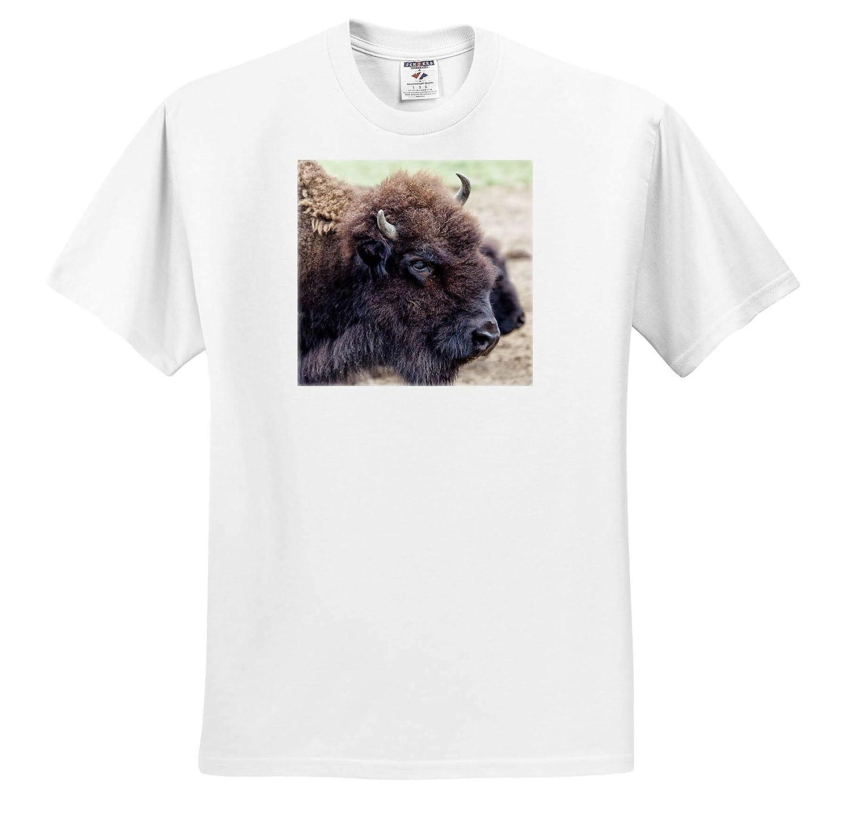 Moiese USA Bison Bison Portrait at National Bison Range 3dRose Danita Delimont ts/_314919 Montana - Adult T-Shirt XL