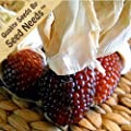 """500 Seeds, Ornamental Corn """"Strawberry"""" (Zea mays) Seeds By Seed Needs"""