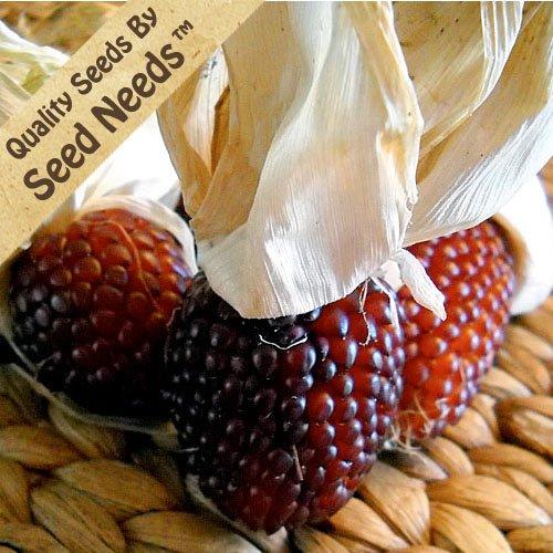 500 Seeds, Ornamental Corn