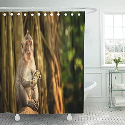 Emvency Waterproof Fabric Shower Curtain Hooks Monkey Catarrhini Old World Eating Mango Sitting On Rock In