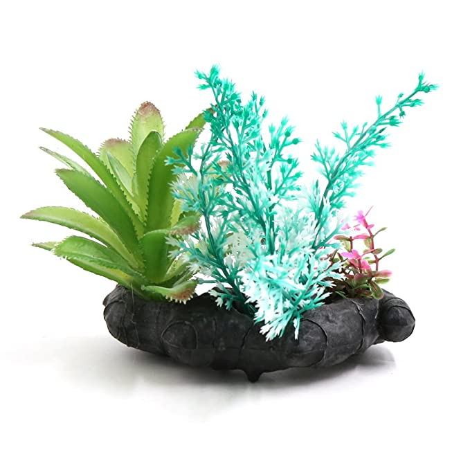 Amazon.com : eDealMax Peces de plástico tanque terrario Plantas Decoración Base de cerámica Para Reptiles : Pet Supplies