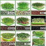 SHEING Sprouting Seeds Tray, BPA Free Soil-Free Big