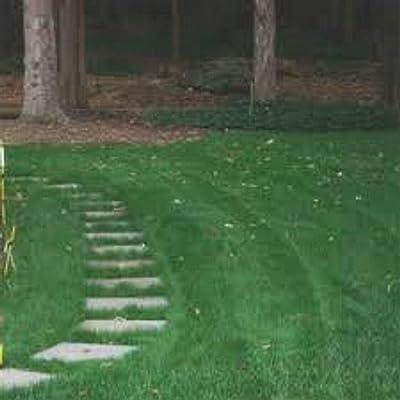 AchmadAnam - Seeds - 10 LBS Shady Lawn Grass Mix Creeping Red Fescue, Bluegrass, Ryegrass Mix : Garden & Outdoor
