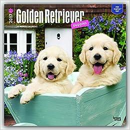amazon golden retriever puppies 2017 calendar browntrout
