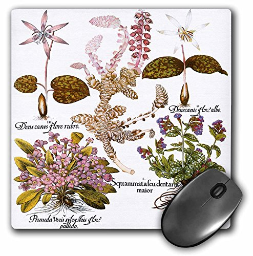 (3dRose BLN Botanical Plates by Basilius Besler - White Toothward, White Dogtooth Violet, Lungwort, Common Primrose - MousePad (mp_173765_1))