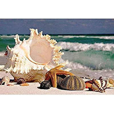 NA Jigsaw Puzzle for Adults 1000 Pieces - Shell - DIY Wooden Set Ideal Gift,Perfect Home Decoration 75X50Cm: Toys & Games