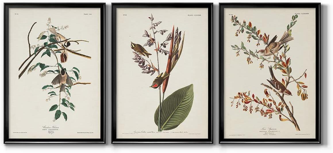 Wall Art, Home Décor, Rustic, Contemporary, Art Deco, Italian, Pl. 160 Carolina Titmouse Black Framed Canvas, 3 Piece Set, 22X30