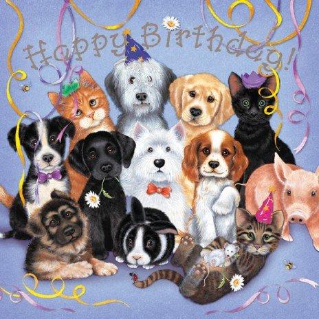 Best Friends Party Mixed Dogs Birthday Card Border Collie Westie Labrador Cavalier German Shepherd Cats Amazoncouk Kitchen Home