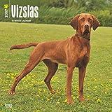 Vizslas Wall Calendar Dogs 2017 {jg} Best Holiday Gift Ideas - Great for mom, dad, sister, brother, grandparents, , grandchildren, grandma, gay, lgbtq.