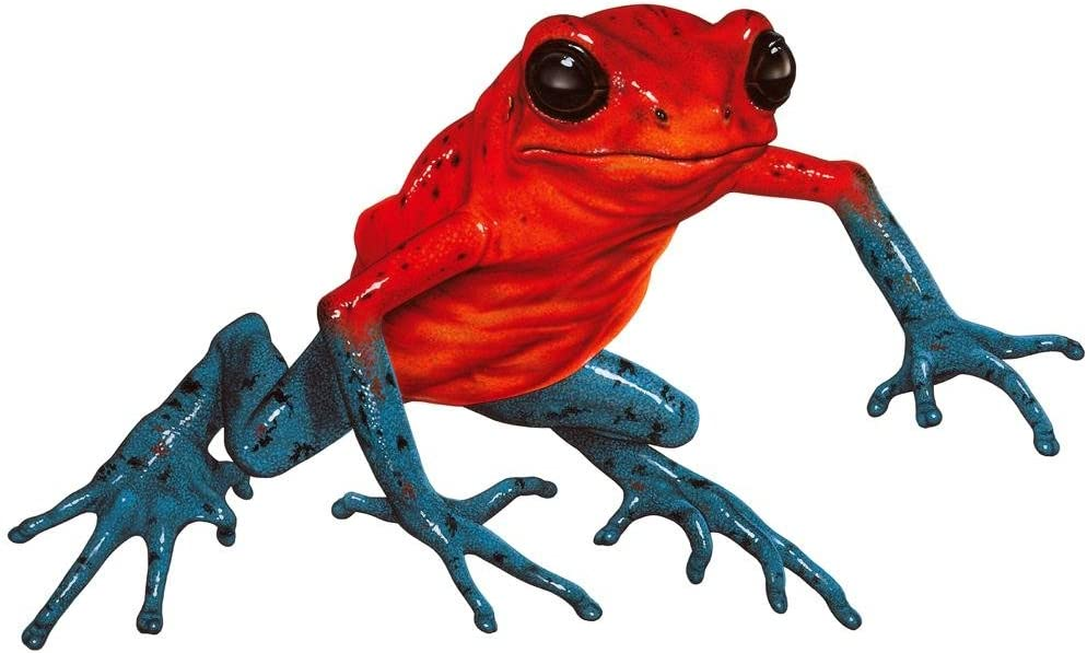 48 in H x 48 in W WM361882 Wallmonkeys Poison Frog Wall Decal Peel and Stick Animal Graphics