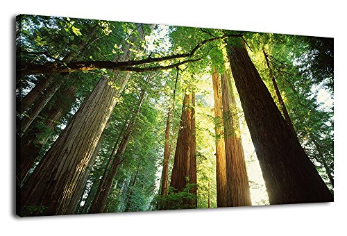 Canvas Wall Art Redwood Nature Picture Prints Long Canvas Art Green Tree Canvas Artwork Contemporary Wall Art National and States Parks Forest Landscape for Office Wall Decor Home Decoration 24