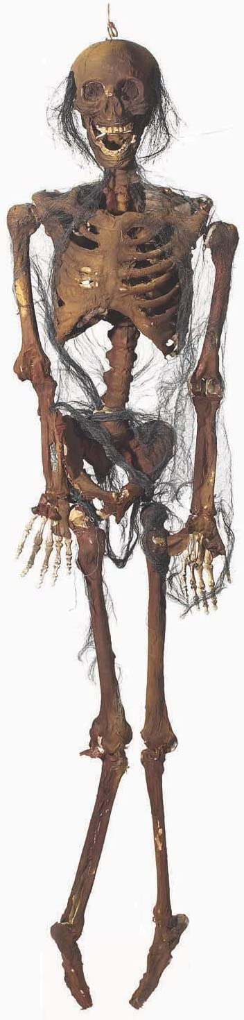 One Size As Shown 60-Inches Forum Novelties Fully Body Rotten Skeleton Decoration