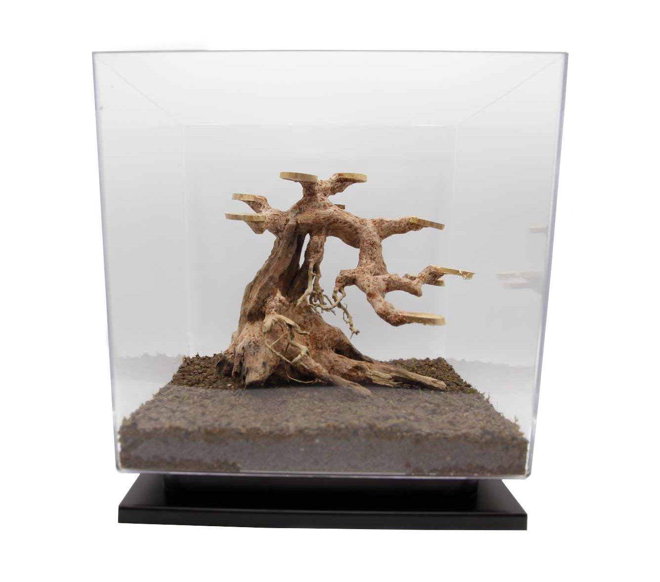 Bonsai Driftwood Aquarium, Semi Cascade Style for Tank 25x25x25 cm Or Bigger. Minifiss