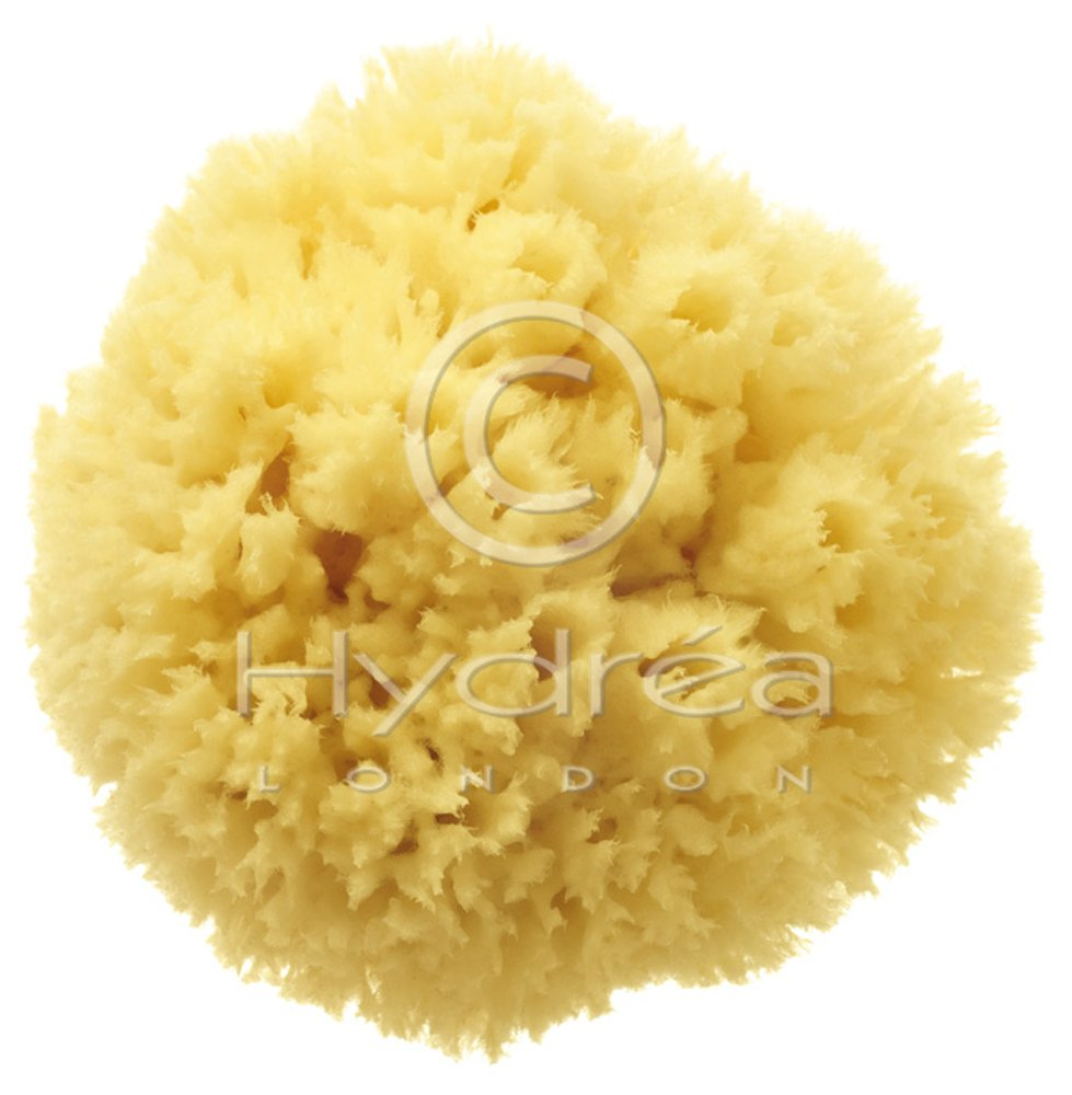 Hydrea London Premium Quality Caribbean Natural Wool Sea Sponge Size 4½-5 BW/5W