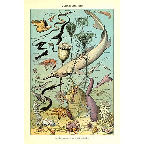 Vintage Poster Print Art Marine Life Organism Deep Sea Fish Creatures Fishes Species Breeds Identification Reference Chart Collection Wall Decor