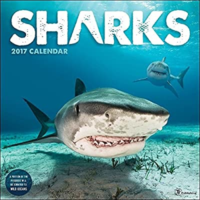TF Publishing 171186 Wall Calendar 2017, Sharks