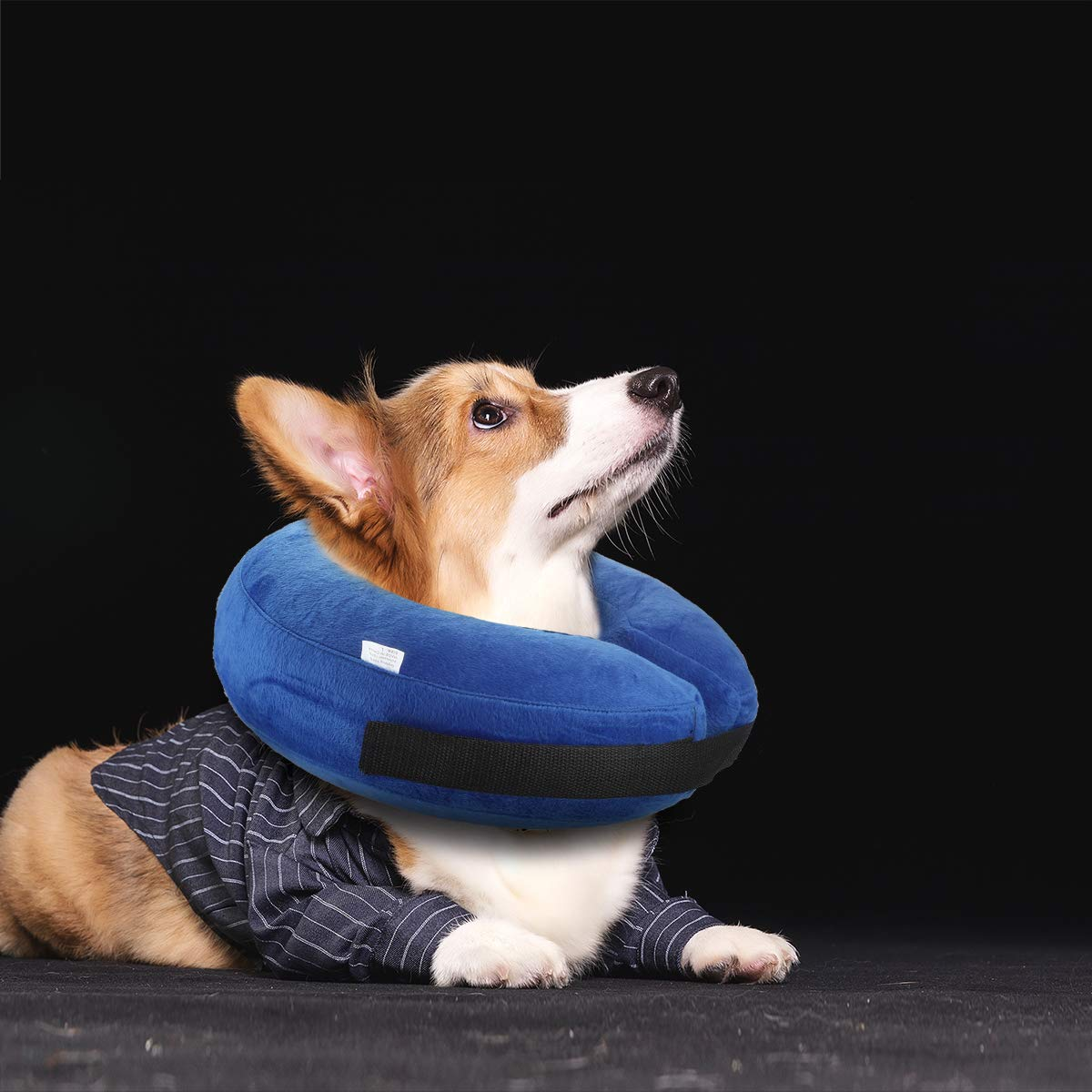Protective Inflatable Dog Cone Collar,Comfortable Designed to Prevent Pets from Biting Scratching at Injuries, Stitches, Rashes Wounds,Adjustable Soft Pet Recovery Collar for Dogs or Cats (M) by sunpangpang