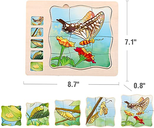 Details about  /Wooden 5 Layers Butterfly Life Cycle Puzzle