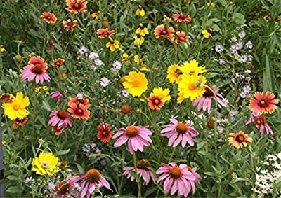 Honey Bee Flower Mix, Cover up to 7000 Sq. Ft.5lb, 1lb, and 2lb Options!