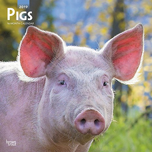 Pet Calendar - Pigs 2019 12 x 12 Inch Monthly Square Wall Calendar, Domestic Pet Farm Animals