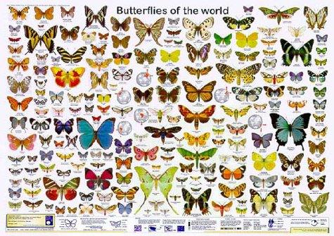 Schmetterlinge der Welt (Planet-Poster-Box)