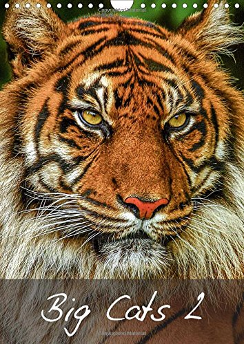 Dalyn Natural (Big Cats2 2016: Magnificent Felines from around the World (Calvendo Animals))