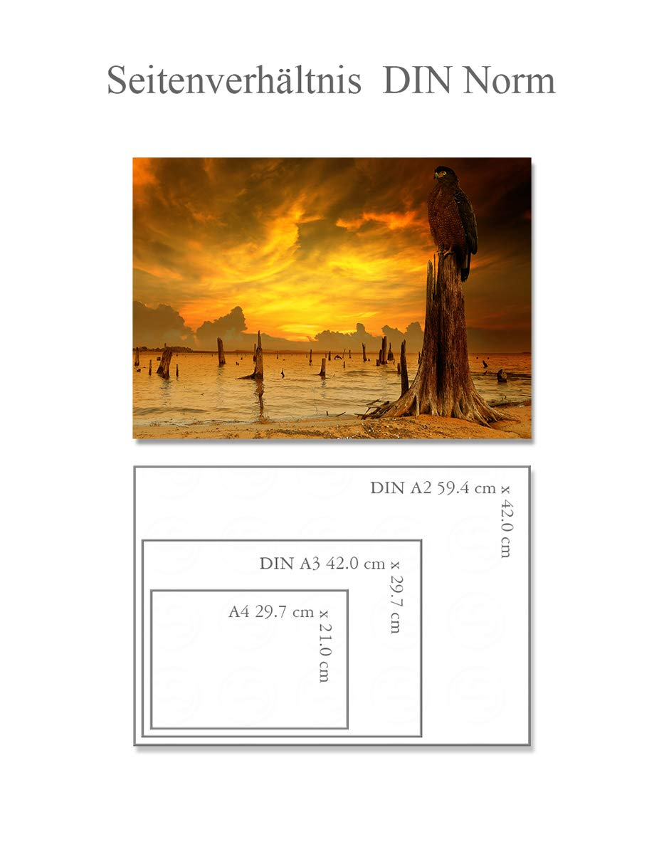 Postereck - Poster 1410 - Falke, Sonnenuntergang See Ufer Baum ...