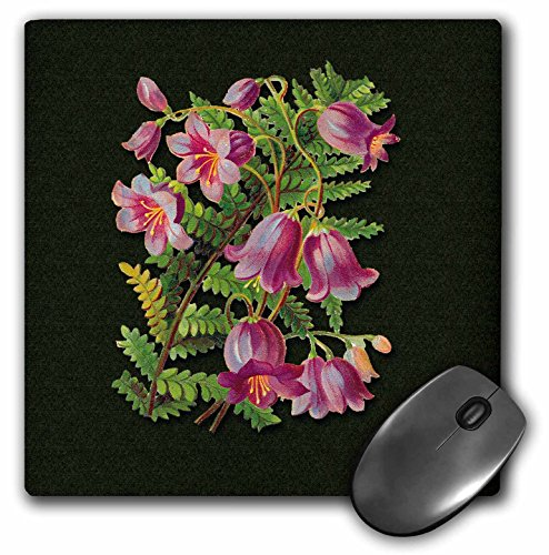 3dRose BLN Victorian Fruits and Flowers Collection - Pretty Pink Bell Shaped Flowers with a Fern Leaf on a Green Background - MousePad ()