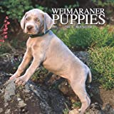Weimaraner Puppies 2007 Mini Calendar