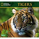 National Geographic Tigers 2017 Wall Calendar