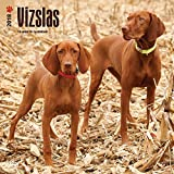 Vizslas Wall Calendar Dogs 2018 BEST VALUE {jg} Best Holiday Gift Ideas - Great for mom, dad, sister, brother, grandparents, grandchildren, grandma, gay, lgbtq.