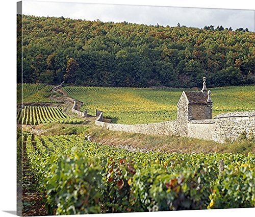 Stone wall dividing vineyards, Clos St. Jacques, Gevrey-Chambertin, Cote-dOr, Burgundy, France Gallery-Wrapped Canvas (Burgundy Chambertin Gevrey)