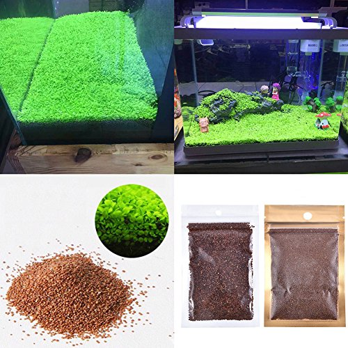61PHsaxFgmL - Aquarium Plants Seeds Aquatic Double Leaf Carpet Water Grass, for Fish Tank Rock Lawn Garden Decor
