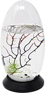 EcoSphere Closed Aquatic Ecosystem with Revolving Base
