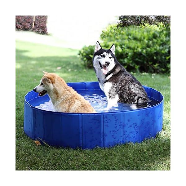melhor-piscina-para-cachorro-de-plastico-PAWZ-Road