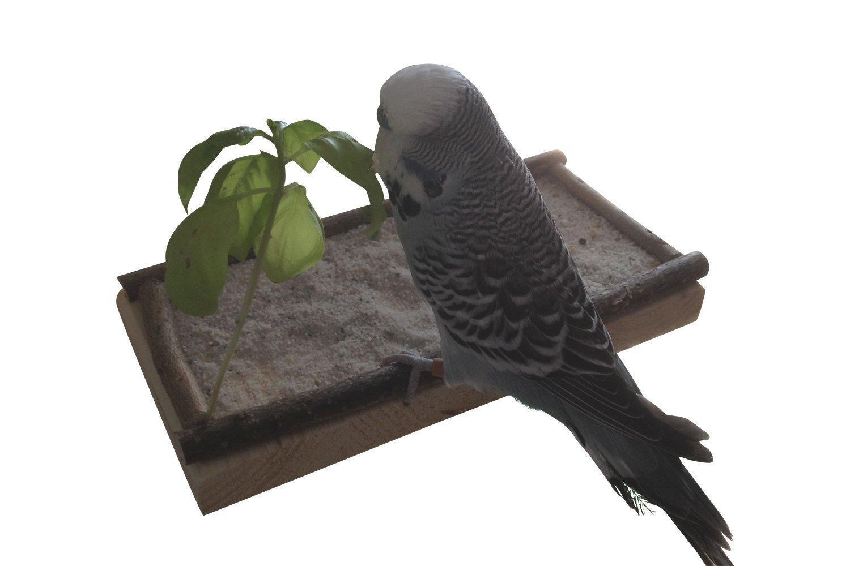 Super Siège Planche 20x10cm avec bois naturel pour perruche calopsitte| platforme pour Cage a Oiseaux perroquet| plateau, accessoires d'oiseaux allonger, asseoir, dormir Vogelgaleria