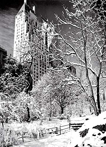 New York City Christmas Card - Central Park in Snow, New York Christmas Cards Boxed Set of 12 Holiday Cards And 12 Envelopes. Made In USA
