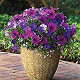 Park Seed Healing Waters Petunia-Bacopa Fuseable Seeds