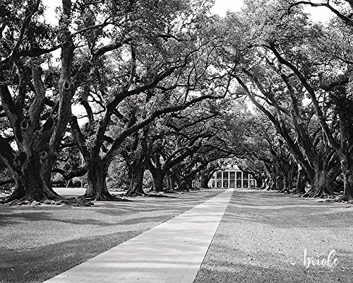 Louisiana Oak Alley Plantation (Classic Oak Canopy)