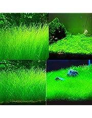 Semillas de hierba para acuario - Delaman Mini Double Leaf, plantas de jardinería en primer plano similares Semillas para acuario