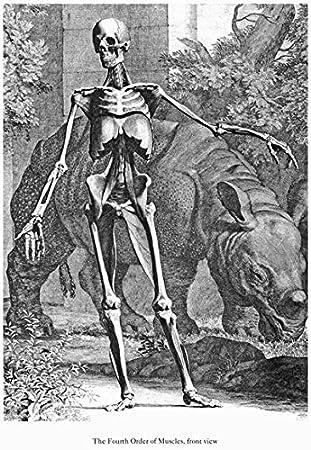 Amazon.de: ML46 Vintage Medical Anatomie Illustration menschlichen ...