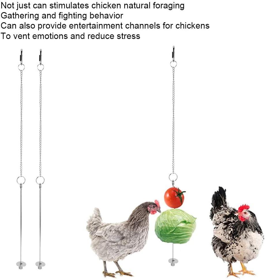 Cikonielf 2 pcs Pet Poulet en Acier Inoxydable Fruits L/égumes Ma/ïs Fourchette Fourrage Outil Alimentaire Suspendu Mangeoire pour Poules Oiseaux