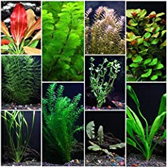 This is an excellent aquarium plant combination to bring life to your aquascape. The plants in this package are all truly aquatic plants that will enhance the biological ecosystem in your aquarium and make your fish happy too! Live aquarium p...