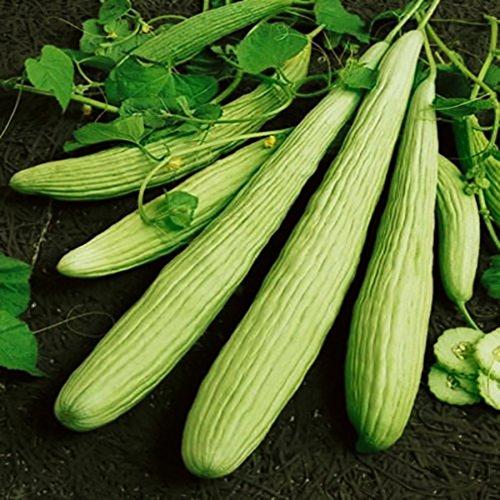 - Seeds Rare Cucumber Armenian Pickling Vegetable Organic Heirloom Ukraine
