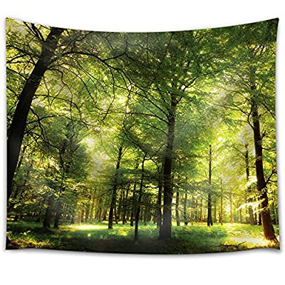 Forest Filled with Trees and with Glimpses of The Sun, Premium Creation, Grand Artistry