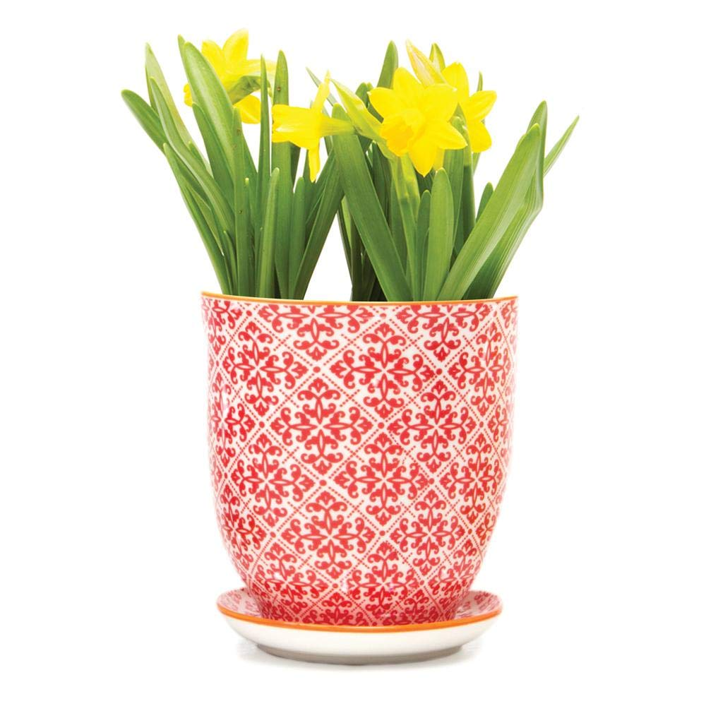 Chive – Big Liberte, Large Succulent and Cactus Planter Pot – 4.25 Ceramic Flower and Plant Container with Drainage Hole and Detachable Saucer Great for Indoor Outdoor Garden Decor Red