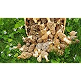 HATCHMATIC Germination Seeds: Morel Spores in Sawdust Garden Seed Spore kit from WV 5 Gallon kit